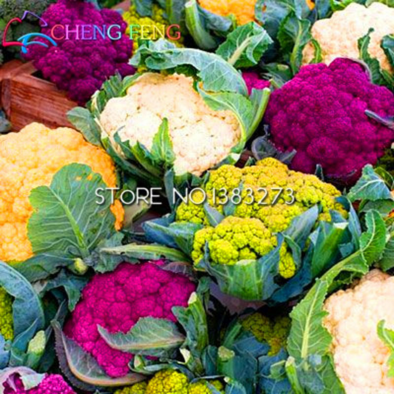 100 pcs cauliflower plants rainbow Color packaging vegetable plants For Garden farm plants bonsai * like flower Diy plant Sement