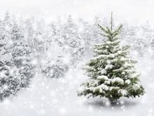 Рождественские украшения для дома фотографии фонов рождественские Фон Фото фон новорожденный Рождество фон D-7838