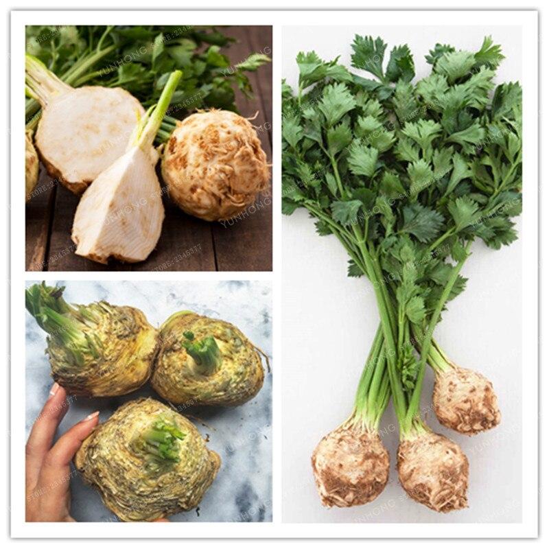 100 шт. корень сельдерей бонсай овощей бонсай сферические корень петрушки бонсай овощей ароматный овощей бонсай для дома и сада