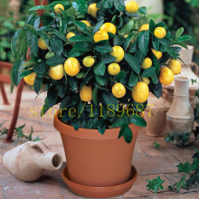 лучшая цена 1bag=20 pcs bonsai lemon tree seeds NO-GMO  fruit lemon seeds for home garden planting