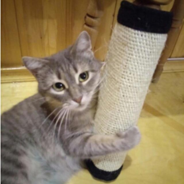 Cat Scratch Pad Bordo di Protezione Del Piede Mobili Sisal Naturale Gatto Tiragr