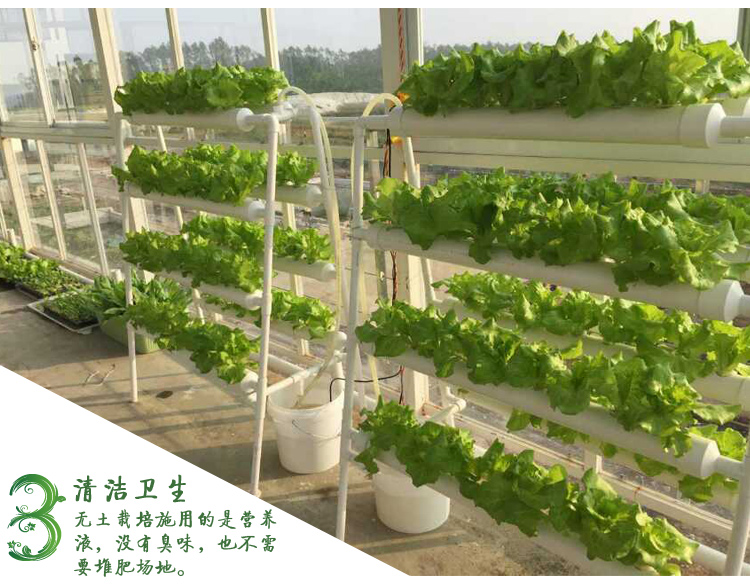 Hydroponics system NFT with 72pcs of net cup. Nutrient Film Technique (NFT) image