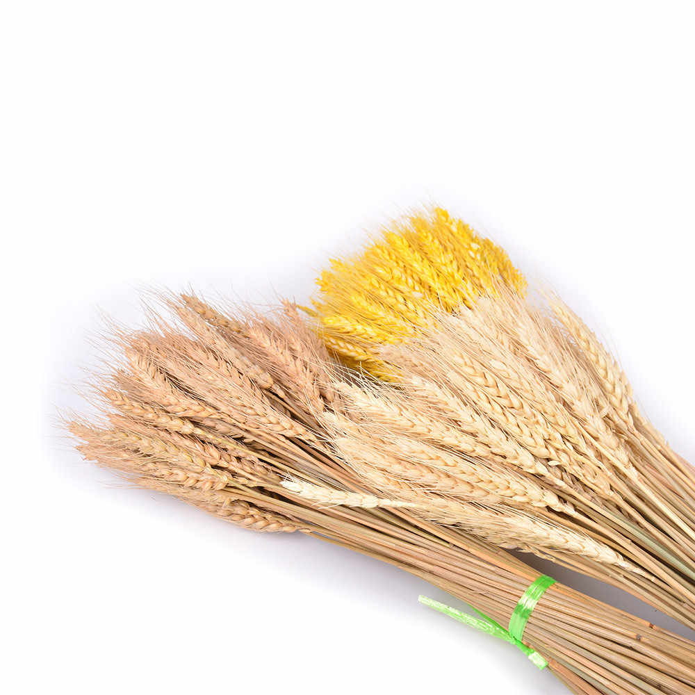 SUEF 1/5/10pcs Natural dried flower wheat simulation decoration simulation flowers dry flower wedding family  decoration @1