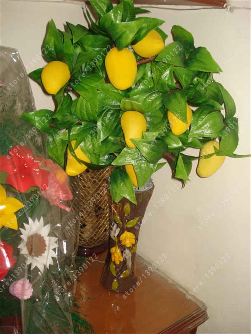 2 Pcs Mango Seeds,mini Mango Tree Seeds,bonsai Tree Seed,organic Fruits