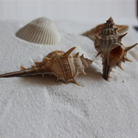 HappyKiss 1 pcs natural Real White Finger Star fish Drapery Hold Great for weddings or asymmetry party sea shells conch