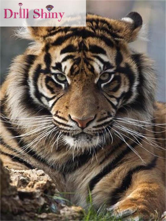 CNA DIY 5D dijamant vez Tiger puni trg vještački dijamant - Umjetnost, obrt i šivanje