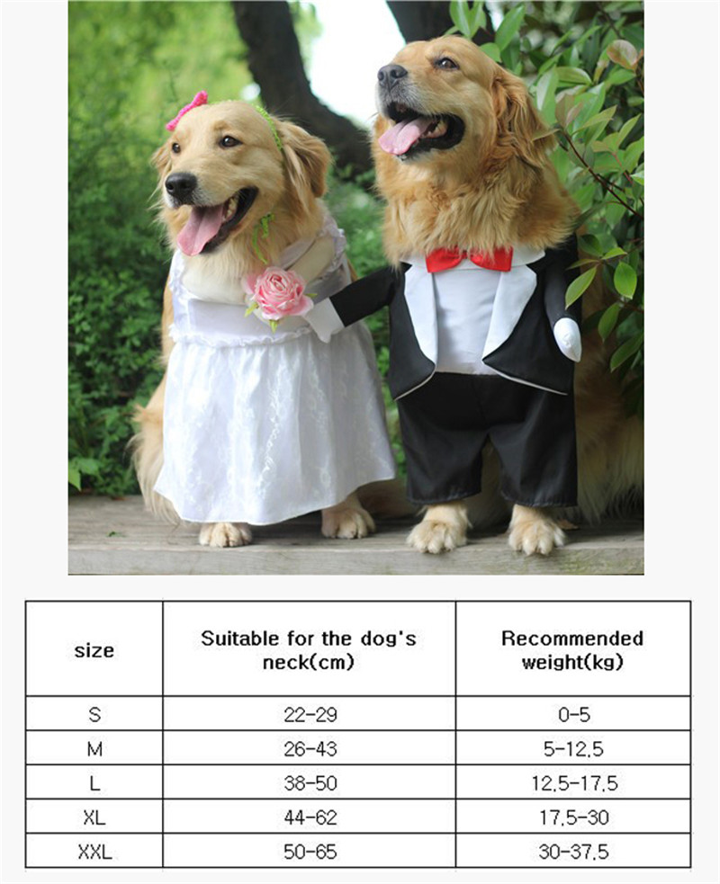 Dog Costume For Wedding Party (7)