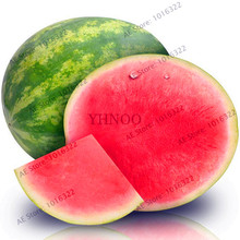 Lowest Price!30 Seedless watermelon Seeds sweet & Square Watermelon juice very tasty easy-growing tropical fruit seeds for plant