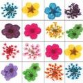 Ногтей 3d-декорации 12 различных сухоцветы блеск уф-гель акриловый подсказки бесплатная доставка