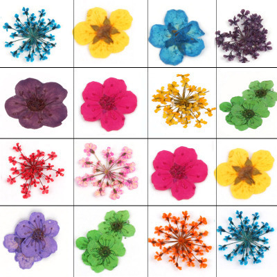 Nail Art 3D Decoration 12 Different Dried Flowers Nail Glitter UV Gel Acrylic Nail Tips Tool Free Shipping biutee 12 colors nail art rhinestones acrylic nail decoration 1 5mm for uv gel laptop diy free shipping ss
