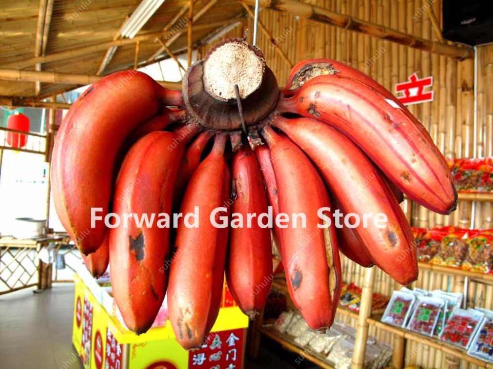 100% Genuino! Nano Banana Albero Bonsai 100 Pcs di Frutta semi di Piante Succulente Rare Mini Bonsai Musa Velutina Sementes Da Fruta Libera La Nave