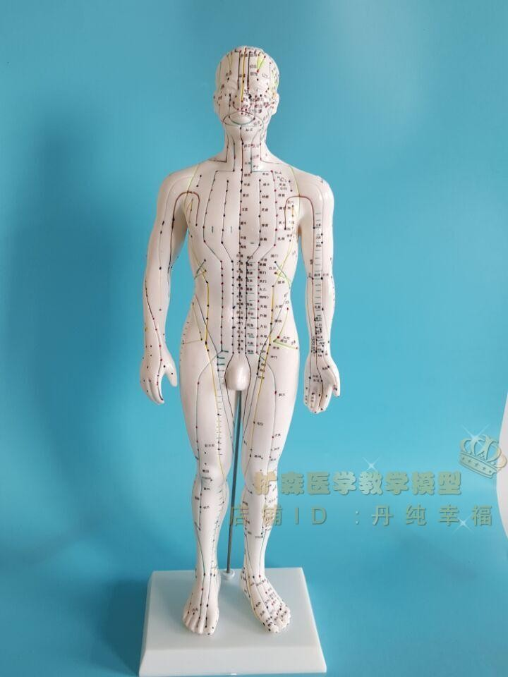 Body meridians Acupuncture Model Meridian points Acupuncture Model 50cm free shipping