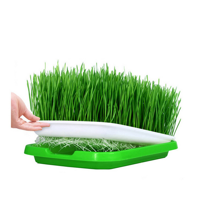 Hydroponic Seed Sprouter Tray Basket Flower Plant Germination Tray Box For Garden Supplies