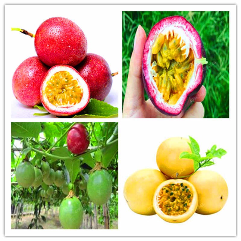 20 pcs/bag passion fruit Rare flower plant Passiflora fruit Diy Potted Plant Passion flower for Home Garden plant free shipping