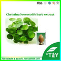 Lysimachia christinae Hance. P.E/Herba Lysimachiae/Christina Loosestrife Herb extract 200G/LOT