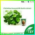 Lysimachia christinae Hance. PE/Herba Lysimachiae/Christina Loosestrife extrato da Erva 200 G/LOTE