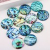 onwear mixed seashell abalone photo glass cabochon 12mm 10mm 14mm 18mm 20mm diy round dome earrings pendant accessories