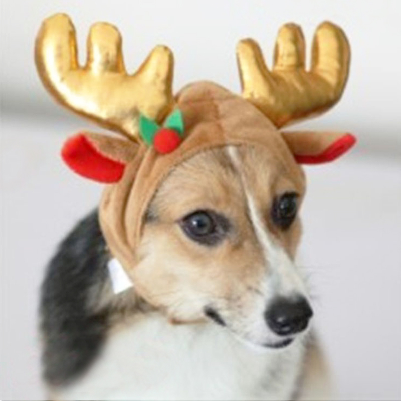 Christmas Hats For Dogs.Us 5 61 42 Off Christmas Decorations For Dog Deer Costume Pet Dog Hats Headdress For Pets Dog Hat Christmas Hat For Dogs Cat Size S M L 10f35 In Dog