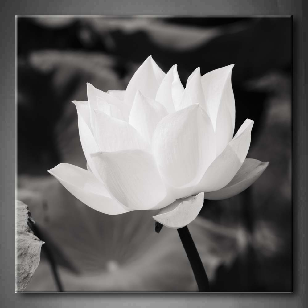 Framed Wall Art Pictures White Lotus Basin Canvas Print Artwork Flower Modern Poster With Wooden Frame For Living RoomFramed Wall Art Pictures White Lotus Basin Canvas Print Artwork Flower Modern Poster With Wooden Frame For Living Room