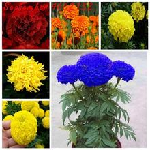 Sales promotion 100PCS African Marigold French Marigold Herbs Tagetes Erecta Flower Bonsai Tagetes Flower For Home Garden Plant impact of paint industry wastewater on tagetes erecta