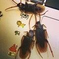 20 pçs/lote Joke Prank Truque Engraçado Brinquedos Modelo Realista Especial Falsa Simulação de Borracha Barata Roach Bug Baratas Galo Brinquedo