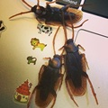 20pcs/lot Prank Funny Trick Joke Toys Special Lifelike Model Simulation Fake Rubber Cockroach Cock Roach Bug Roaches Toy
