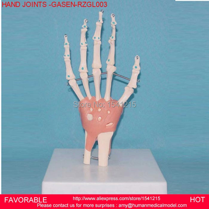 HUMAN HAND JOINT MODEL ,HAND JOINT SKELETON MODEL HUMAN SKELETON MODEL VOLA PALM SKELETON MODEL,HAND JOINTS -GASEN-RZGL003 95% new for air conditioning computer board circuit board kfr 120lw sy sa out check dybh v2 1 good working
