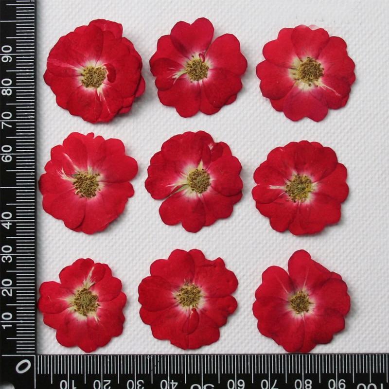 Красный 1000 шт розы сушеные картины с цветами натуральные настоящие растения для детей Обучающие реквизиты Бесплатная доставка