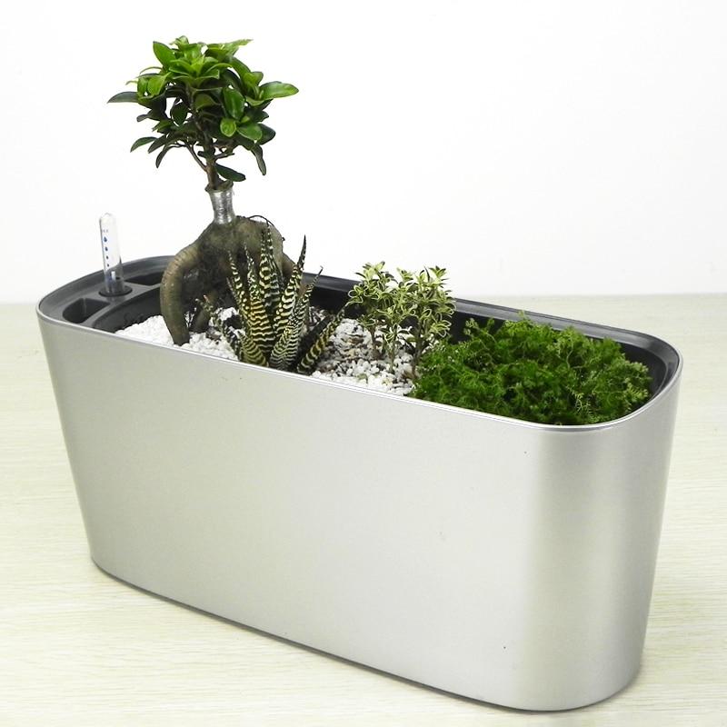 Popular indoor plants nursery buy cheap indoor plants for Zimmerpflanzen trend