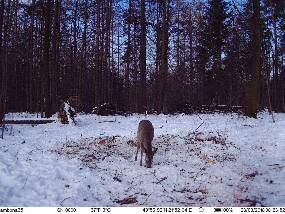 Hunting Camera GPS 4G Scout Guard Night Vision Hunter Camera Chasse Infrared Game Wild Trail Foto Traps Camara De Caza Chasse (7)