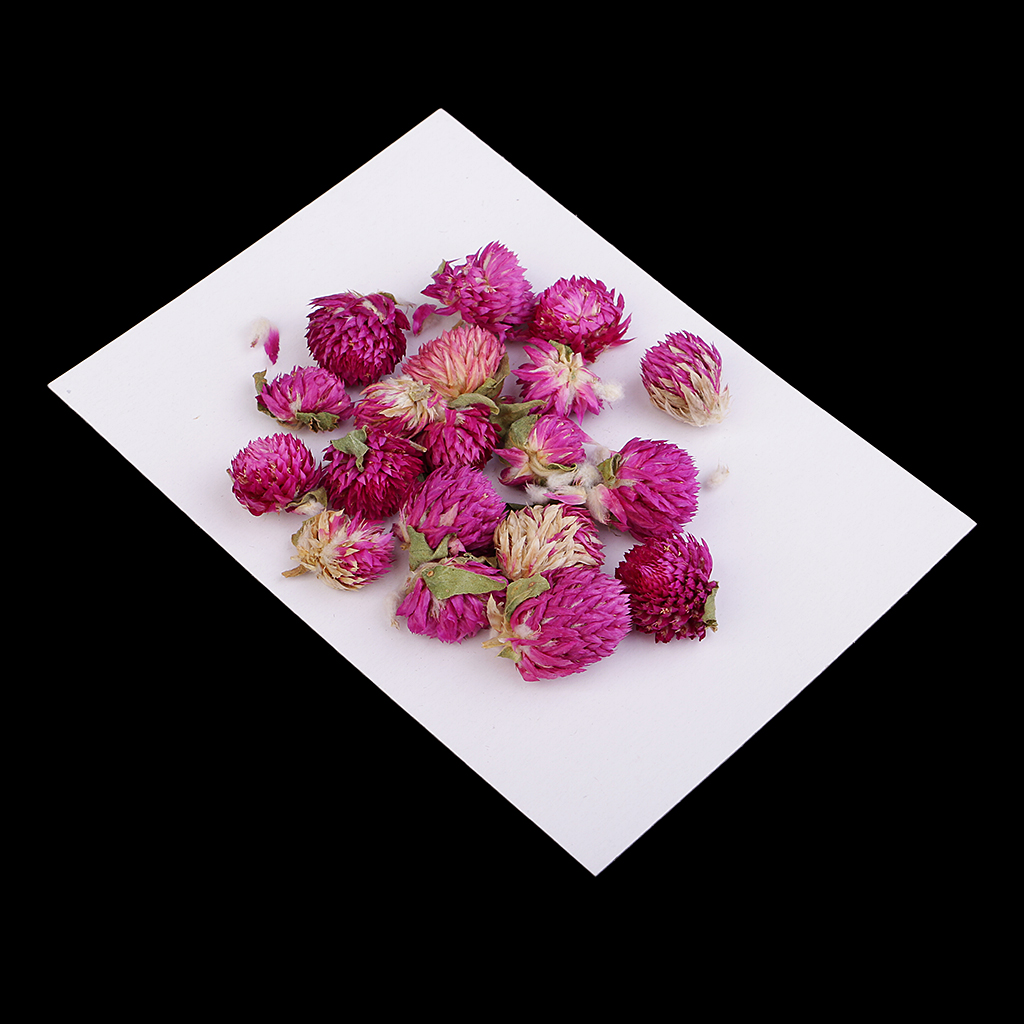 20 Pieces Pressed Flowers Dried Gomphrena Globosa DIY Resin Casting Pendants Jewellery Findings ,Candles, Soap Making Supplies
