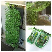 Support pour plantes en Nylon et treillis, 1,8x3.6m, matériel pour plantes, filet d'escalade, Fournitures de jardin, vignes et fruits, livraison
