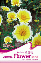 Layia Tidy Tips Annual Flower Seeds, Original Pack, 30 Seeds / Pack