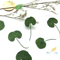 20 Pcs One Side Colored Dried Leaves Mini Plant Pressed Flower Painting Materials Grass Specimen Cards