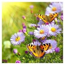 Декоративные поделки алмазная живопись ромашки вышивка бабочки