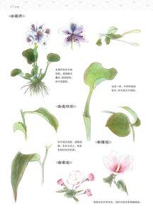 Image 3 - 中国絵画表示細部描画ブック/模造素材の花、鳥、魚や昆虫白ミャオ族教科書