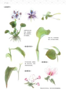 Image 3 - Chinese painting showing fine details Drawing Book / Imitation Material of Flowers, Birds, Fishes and Insects Bai Miao Textbook