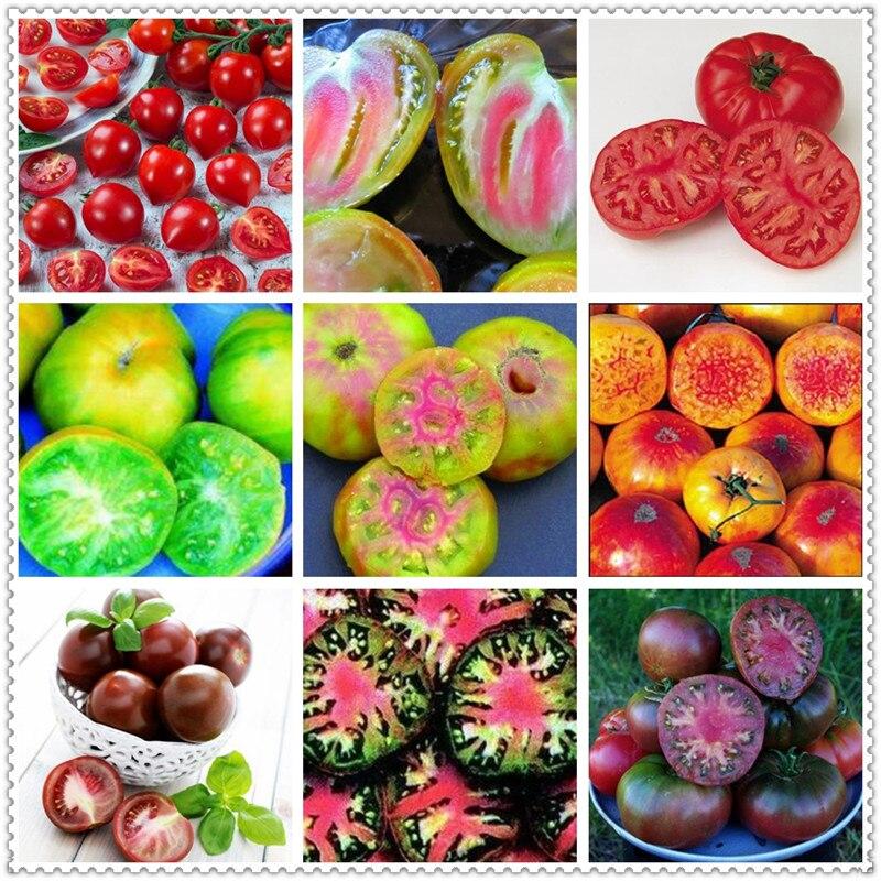 200 шт./сумка молоко красный томат бонсай Cherry органического помидора фруктов и овощей ourdoor завод для дома и сада уровень почкования 97%