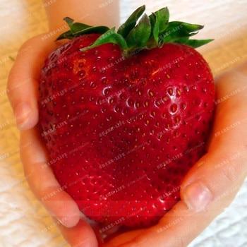 500 шт Редкие Цвет большой клубничный бонсай вишня ягоды, фрукты и овощей бонсай для дома сад Plantiing земляника ананасная дач
