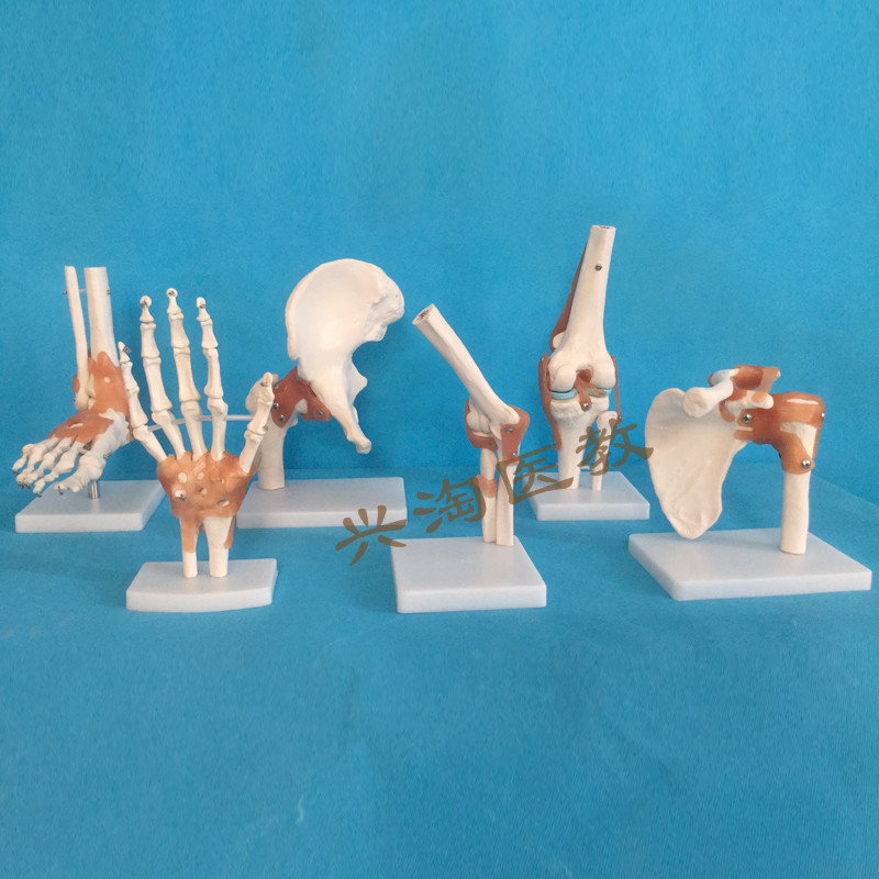Human Adults Skeleton Model Six Joint Model Shoulder Elbow Hip Foot Hand Knee Joint Model Teaching Medical