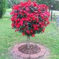 100 Красная Роза Семена деревьев, DIY Главная Сад Горшке, балкон и Двор Цветок Растение Бесплатная Доставка Новый 2016
