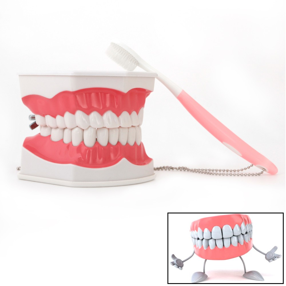 2019 NEW Dental Adult Education Teaching Model With Removable Lower Teeth And Toothbrush