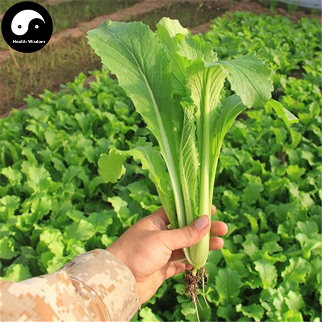 Buy Baby Bok Choy Vegetables Semente 200pcs Plant Cabbage Brassica