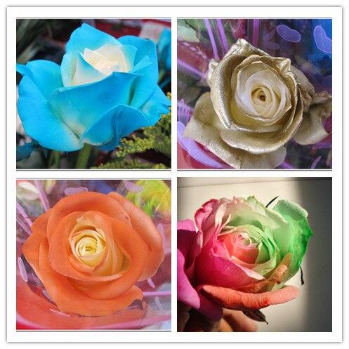 200 PC rares bonsaï graines de fleurs, Rare couleur + Tyrant or rose  semences dans Bonsaïs de Maison \u0026 Jardin sur AliExpress.com