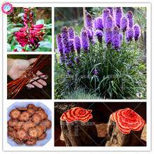 100pcs Liatris spicata seeds Chinese Herbal medicine Plant seeds colorful bonsai flower for perennial garden best packaging 2018