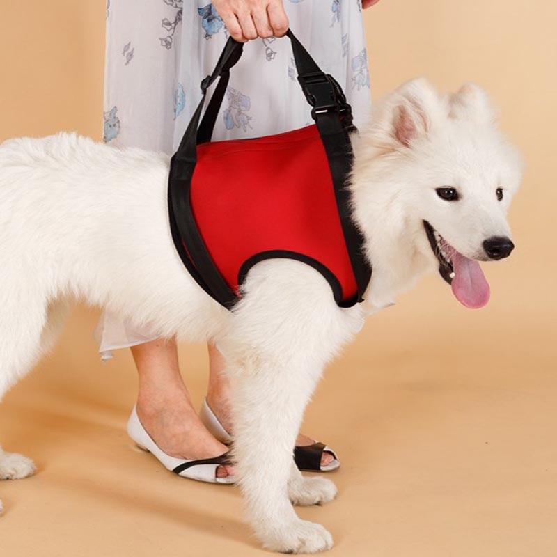 TAILUP Arnés de soporte para levantamiento de perros para K9 Aid - Productos animales - foto 2