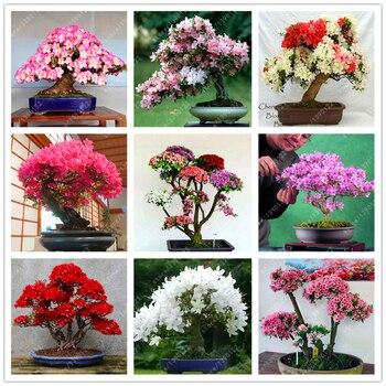 10 Pcs/bag Rare 18 Varieties Sakura seeds Japanese Cherry Blooms bonsai Flower Seeds sakura tree DIY Home & Garden Plant