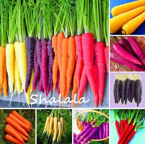 200 Pcs Mexico Rainbow Carrot Rare Edible Vegetable Nutrition Organic Heirloom Colorful Radish NON-GMO Yard Garden Bonsai Plant