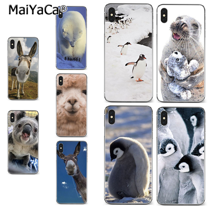 61c9c8ab35 Detail Feedback Questions about MaiYaCa Cute animal koala seal penguin  alpaca polar bear Drawing soft tpu phone Case for iPhone X XS MAX 5 6SPLUS 7  8plus ...
