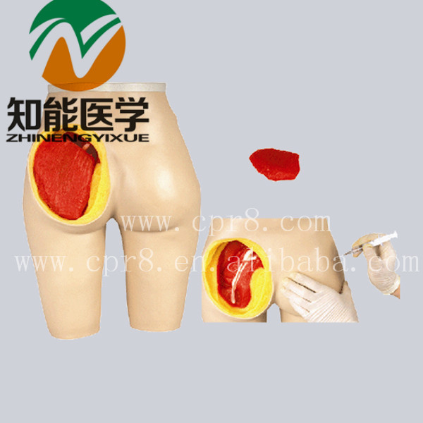 BIX-H4T Advanced Hip Muscle Injection And Anatomical Structure Model WBW013 bix y1005 standard anatomical acupuncture model 60cm